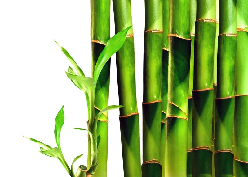 Аромат бамбук
