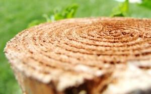 Аромат свежего распила древесины